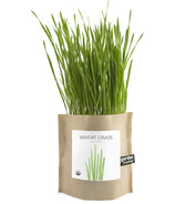 Potting Shed Creations Wheat Grass Garden-in-a-Bag
