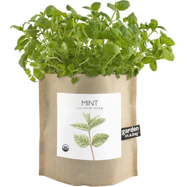 Potting Shed Creations Mint Garden-in-a-Bag