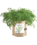 Potting Shed Creations Dill Garden-in-a-Bag