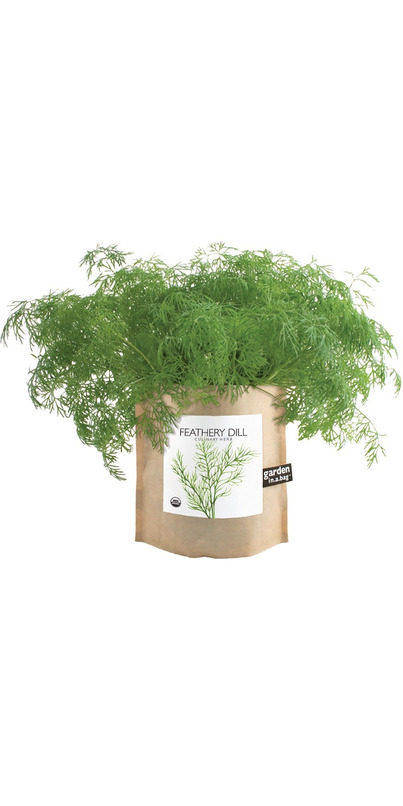 Buy Potting Shed Creations Dill Garden In A Bag At