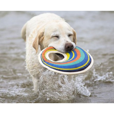 Hugglehounds Squeaky Floating Canvas Flyer Off-Center Hole Water Dog Toy
