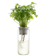 Modern Sprout Eco Planter Parsley