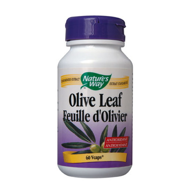 research papers olive leaf extract