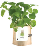 Potting Shed Creations Pet Catnip Garden-in-a-Bag