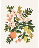 Rifle Paper Co. Citrus Floral Leaf 8x10 Art Print