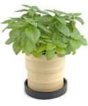 Potting Shed Creations Basil Bamboo Grow Pot