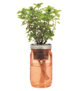 Modern Sprout Garden Jar Mint