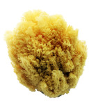 AK Nutrition Natural Sea Sponge